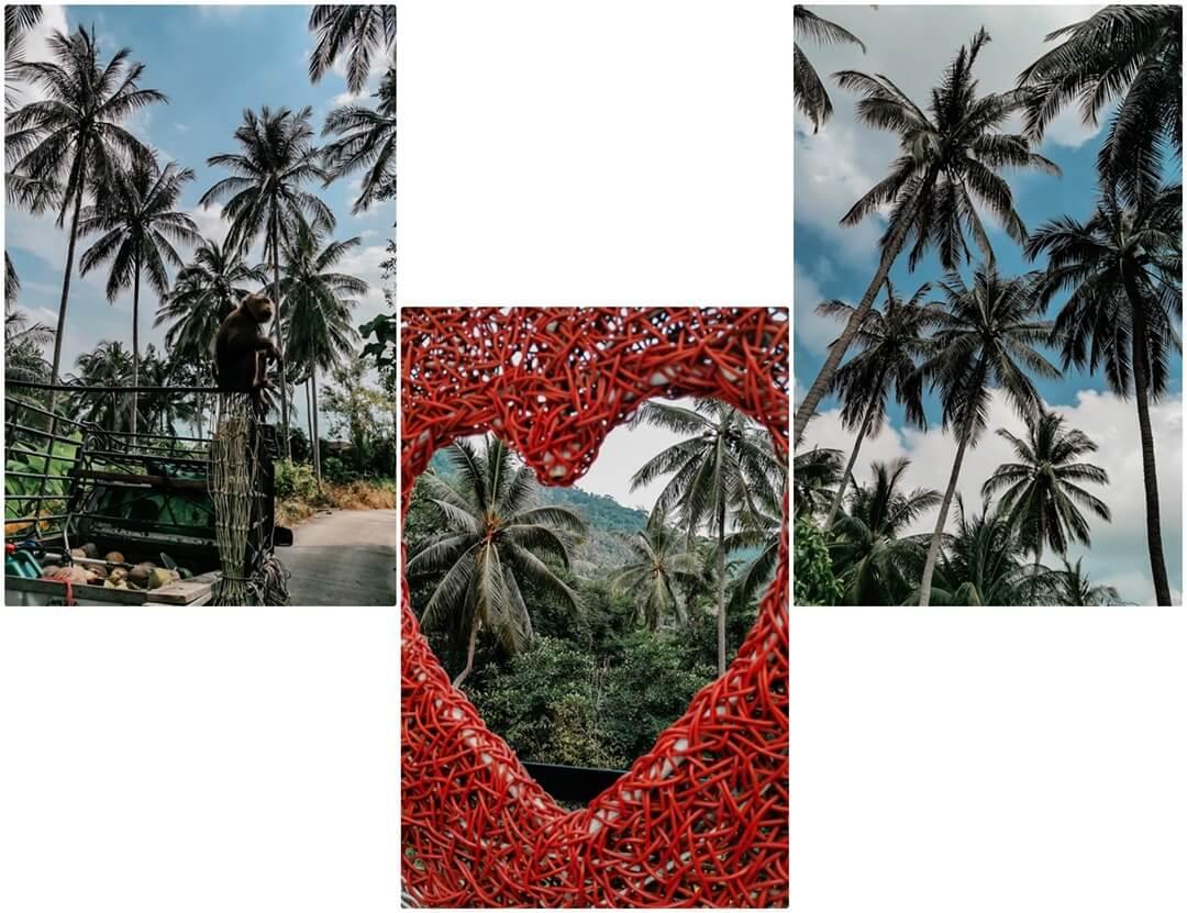 Palmen auf Koh Samui - Tipps & Empfehlungen